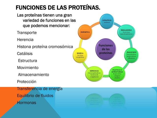 FUNCIONES DE LAS PROTEÍNAS. Las proteínas tienen una gran variedad de funciones en las que podemos mencionar: Transporte H...