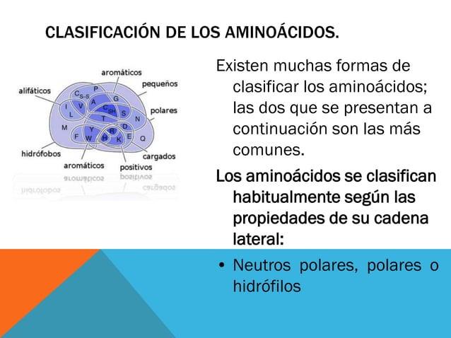 CLASIFICACIÓN DE LOS AMINOÁCIDOS. Existen muchas formas de clasificar los aminoácidos; las dos que se presentan a continua...