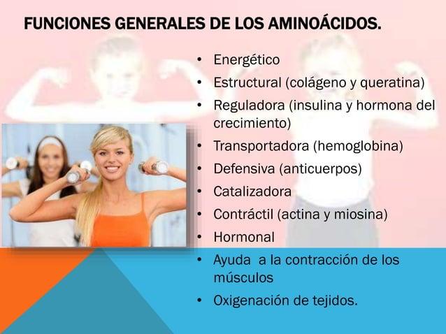 FUNCIONES GENERALES DE LOS AMINOÁCIDOS. • Energético • Estructural (colágeno y queratina) • Reguladora (insulina y hormona...