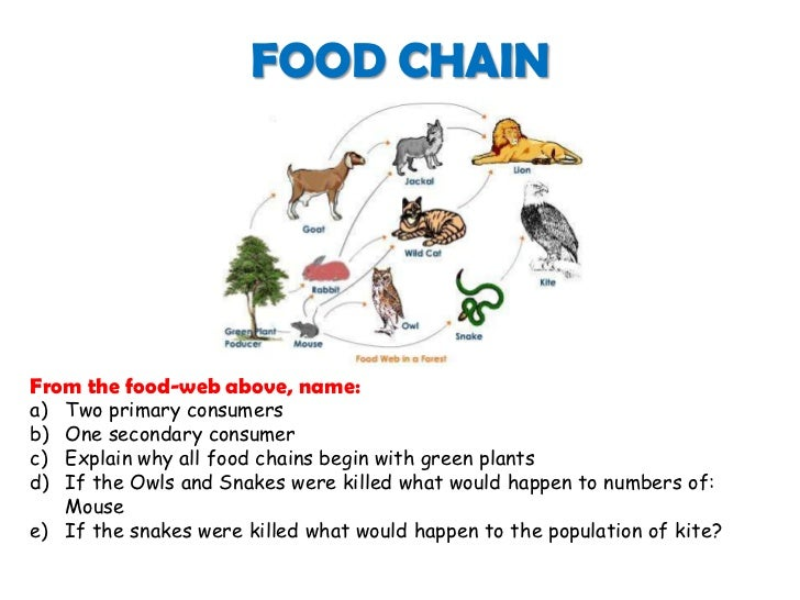 What Eats The Fox In Food Chain