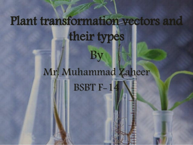 Plant transformation vectors and their types By Mr. Muhammad Zaheer BSBT F-14