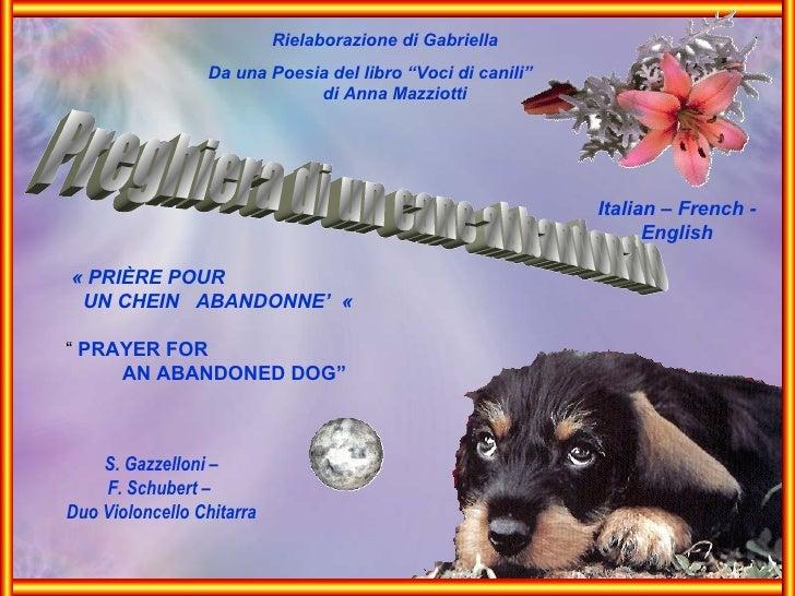 """Preghiera di un cane abbandonato Rielaborazione di Gabriella Da una Poesia del libro """"Voci di canili""""  di Anna Mazziotti S..."""