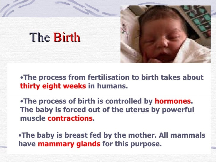 <ul><ul><li>The process from fertilisation to birth takes about  thirty eight weeks  in humans.  </li></ul></ul>The  Birth...