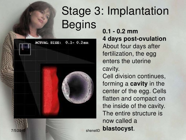 6. The blastocyst is able to invade the endometrium because as the trophoblast cells on the outside of blastocyst touch th...