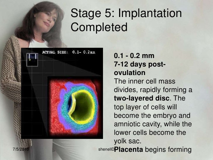 Stage 1: Fertilization<br />1 day post-ovulation<br />1 Egg, 300 Million Sperm<br />0.1 - 0.15 mm<br />Fertilization begin...