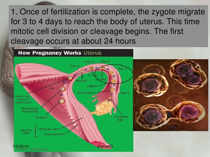 7. Only one spermatozoa is able to penetrate the cell membrane of the ovum. After it has done, cell membrane becomes imper...