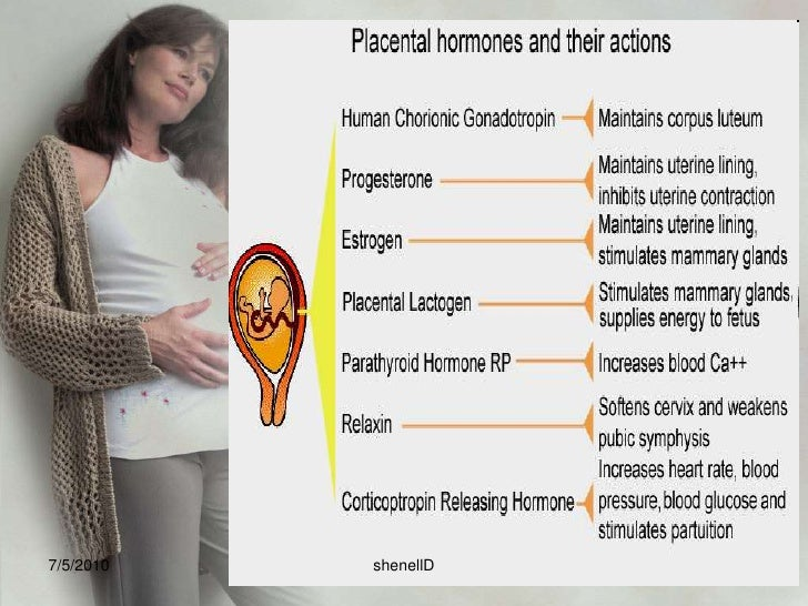 Placenta<br />Consists of an embryonic portion and a maternal portion<br />7/4/2010<br />shenellD<br />