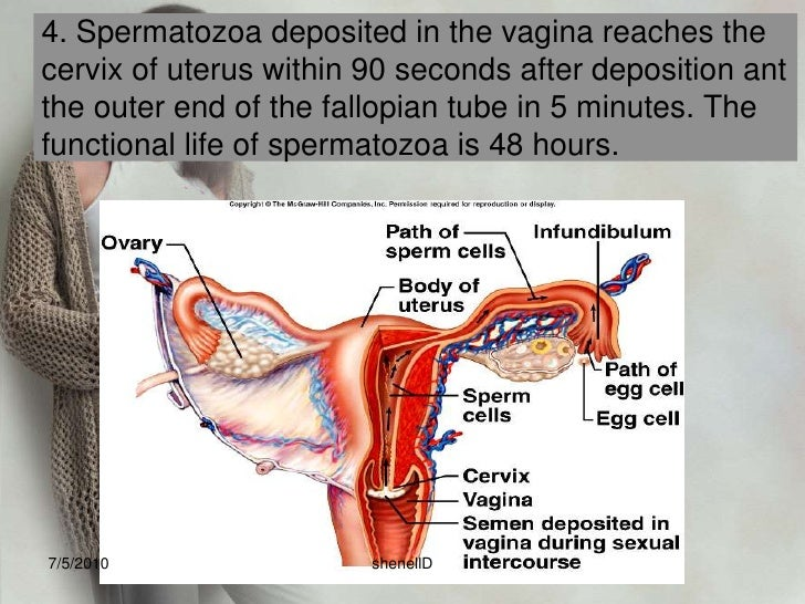 1.Following ovulation, as the ovum is extruded from the graafian follicle, it is surrounded by a ring of mucopolysaccharid...