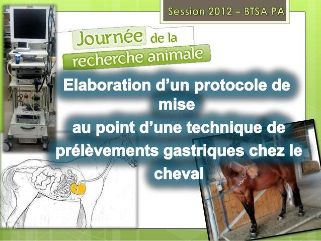Connaître les digestions et  anatomies  digestiveschez le cheval