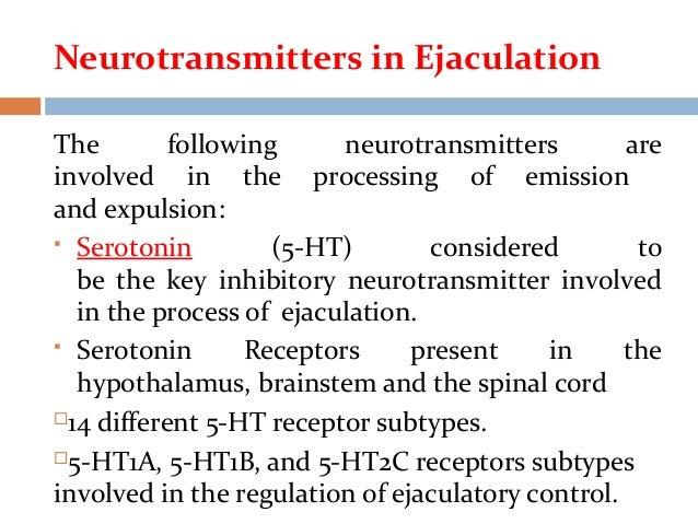Premature ejaculation serotonin