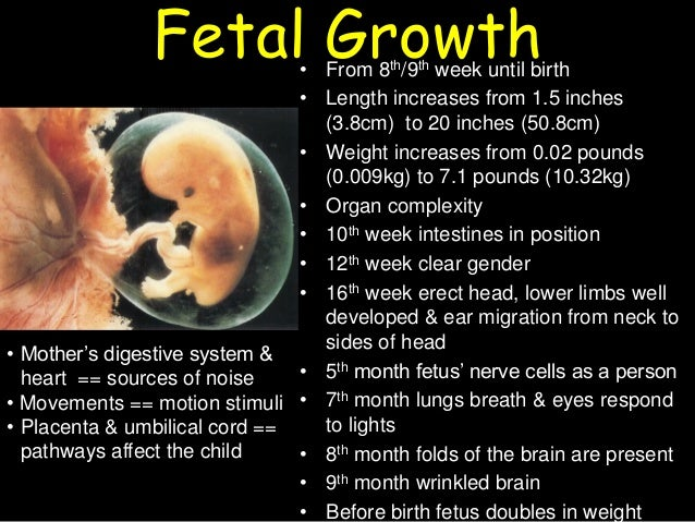 prenatal development and birth essays The stages of prenatal development represent a tremendous amount of change from conception to birth learn more about the science behind each stage.