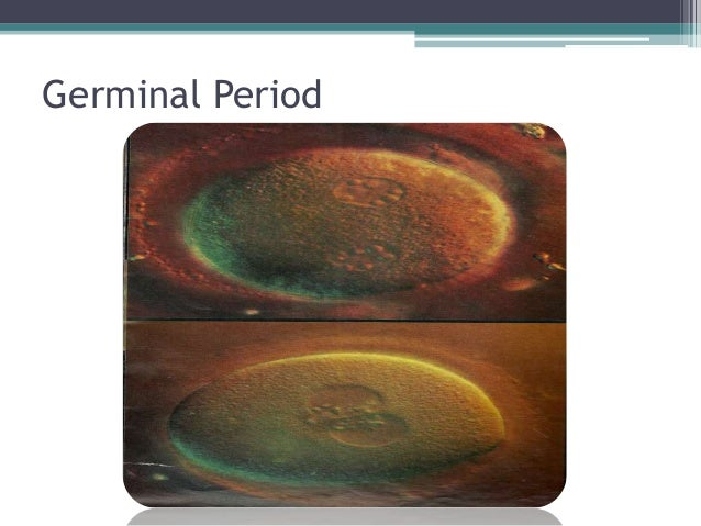 Prenatal Stage Of Development