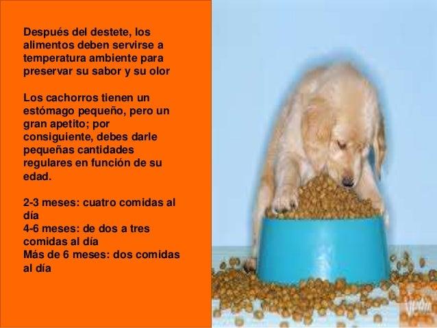 Después del destete, los alimentos deben servirse a temperatura ambiente para preservar su sabor y su olor Los cachorros t...