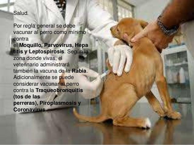 Salud. Por regla general se debe vacunar al perro como mínimo contra el Moquillo, Parvovirus, Hepa titis y Leptospirosis. ...