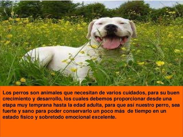 Los perros son animales que necesitan de varios cuidados, para su buen crecimiento y desarrollo, los cuales debemos propor...