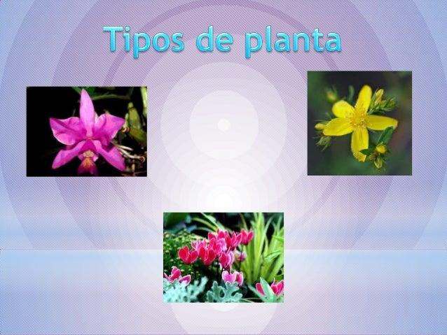 Una planta medicinal es un recurso, cuya parte o extractos se empleancomo drogas en el tratamiento de alguna afección. La ...