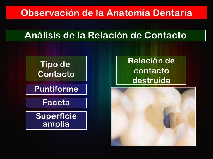 Observación de la Anatomía Dentaria Análisis de la Relación de Contacto Relación de contacto destruida Tipo de  Contacto P...
