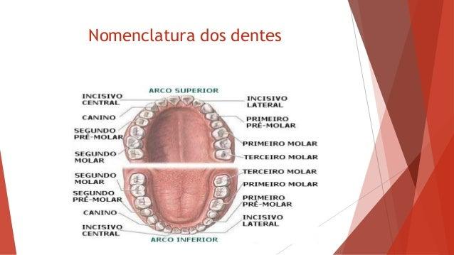 Extremamente Prepara cursos profissionalizantes workshop auxiliar odontologico EM64