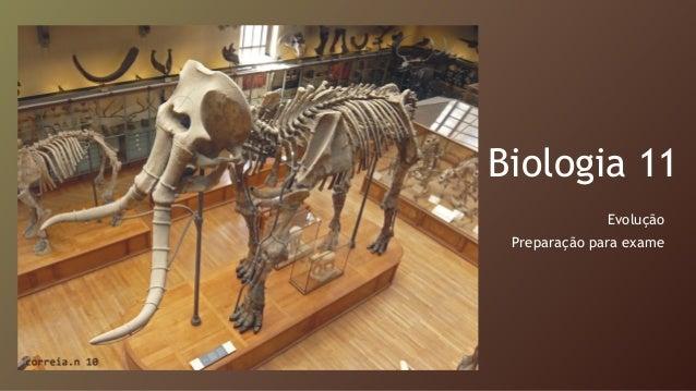 Biologia 11 Evolução Preparação para exame