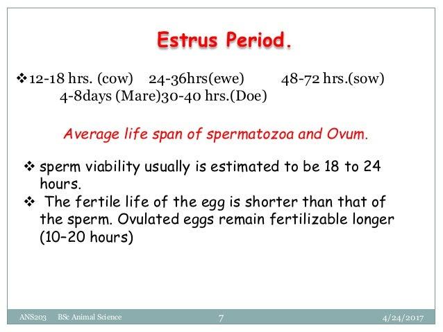 Life span of a sperm