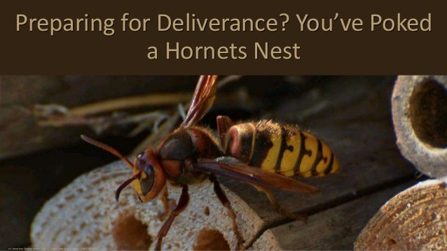 Preparing for Deliverance? You've Poked a Hornets Nest cc: Jonathan Zimmermann - https://www.flickr.com/photos/128867994@N...