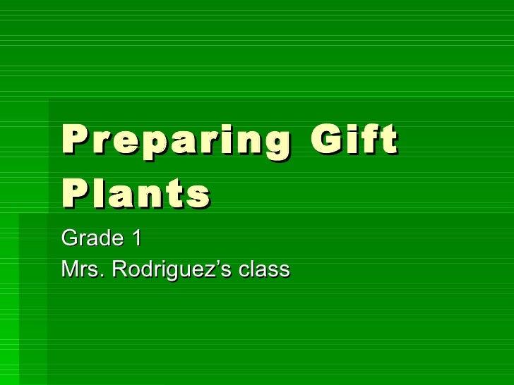 Preparing Gift Plants Grade 1  Mrs. Rodriguez's class