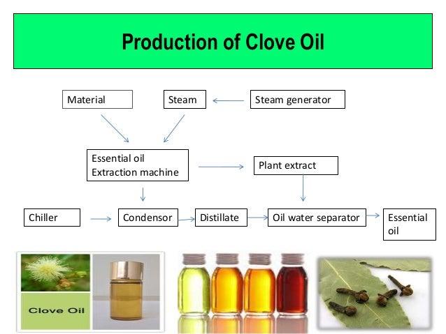 Oil of clove
