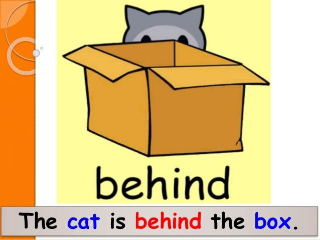 Cat In Box With Bird