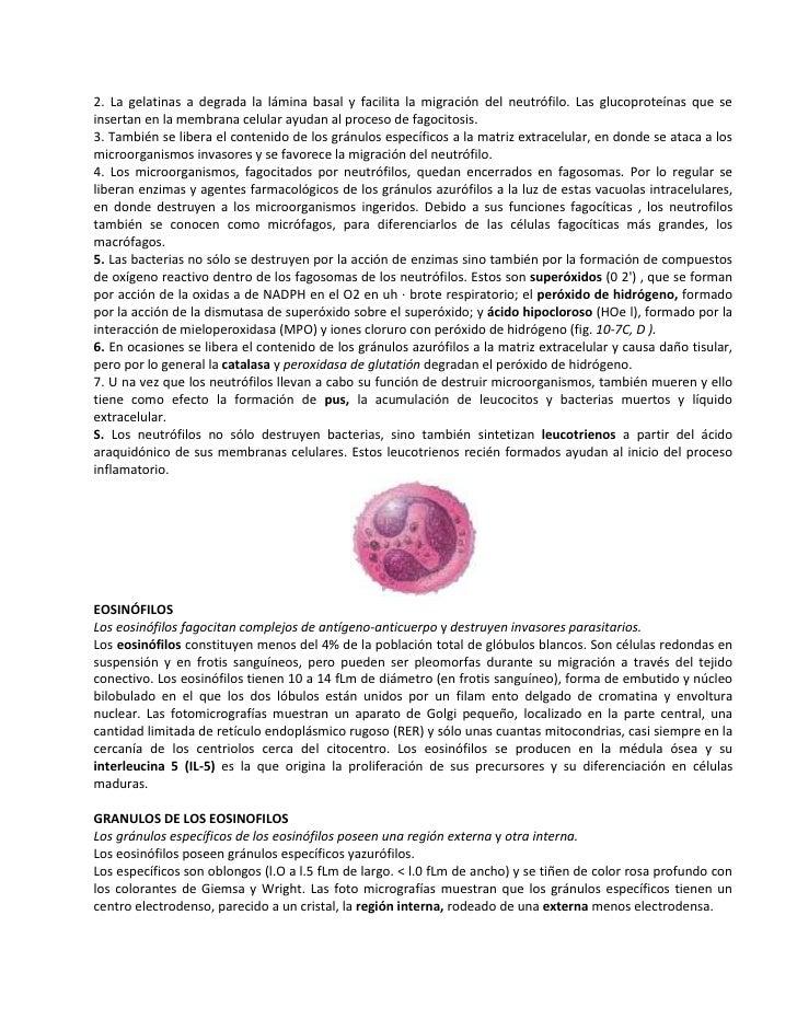 2. La gelatinas a degrada la lámina basal y facilita la migración del neutrófilo. Las glucoproteínas que seinsertan en la ...