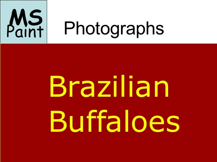 Photographs <ul><li>MS </li></ul>Paint Brazilian Buffaloes