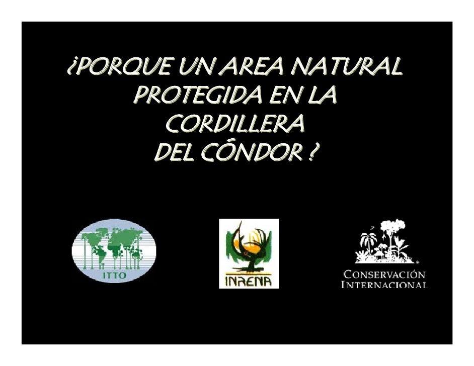 ¿PORQUE UN AREA NATURAL      PROTEGIDA EN LA         CORDILLERA        DEL CÓNDOR ?