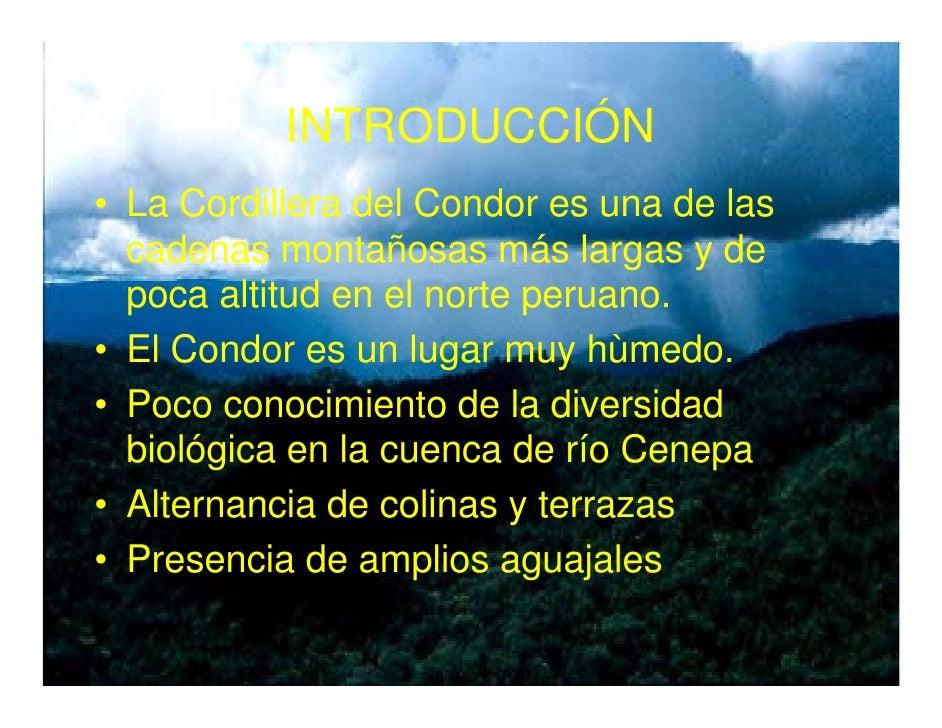 Vegetacion de la zona reservada Santiago Comaina, Cordillera del Condor Slide 2
