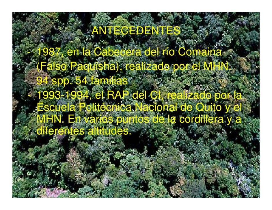 Vegetacion de la zona reservada Santiago Comaina, Cordillera del Condor Slide 3