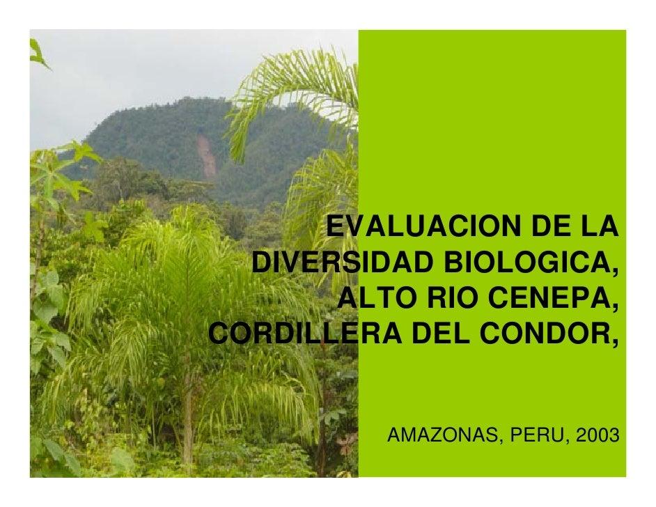 EVALUACION DE LA   DIVERSIDAD BIOLOGICA,        ALTO RIO CENEPA, CORDILLERA DEL CONDOR,             AMAZONAS, PERU, 2003