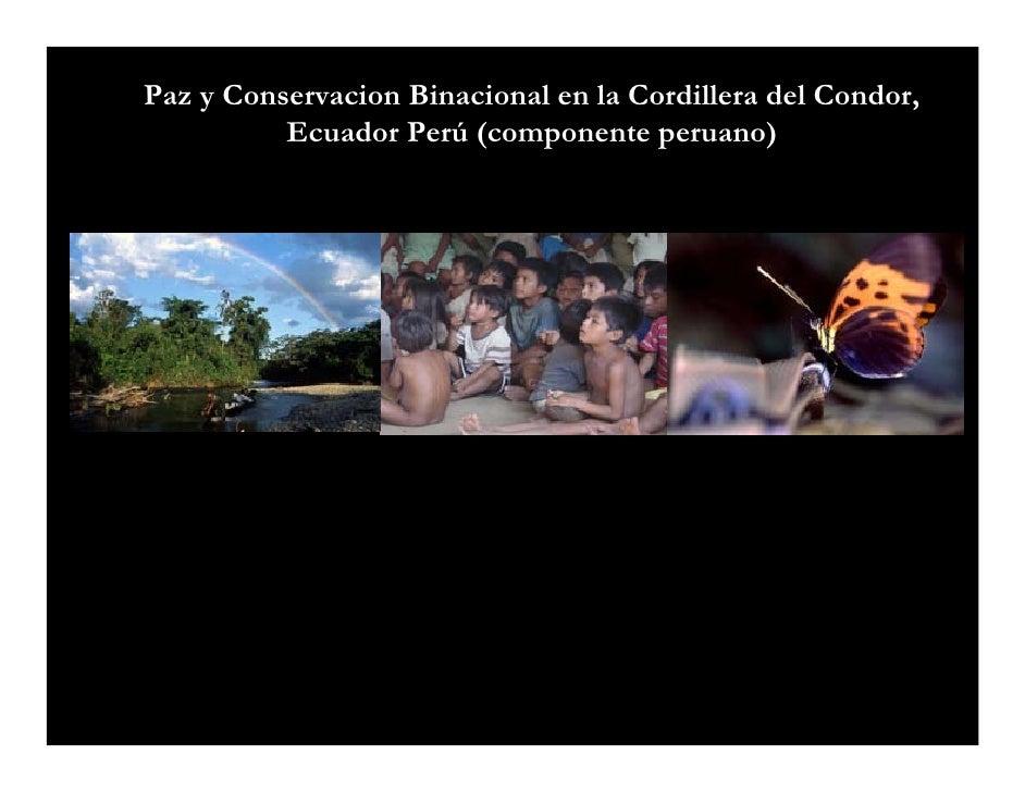 Paz y Conservacion Binacional en la Cordillera del Condor,           Ecuador Perú (componente peruano)