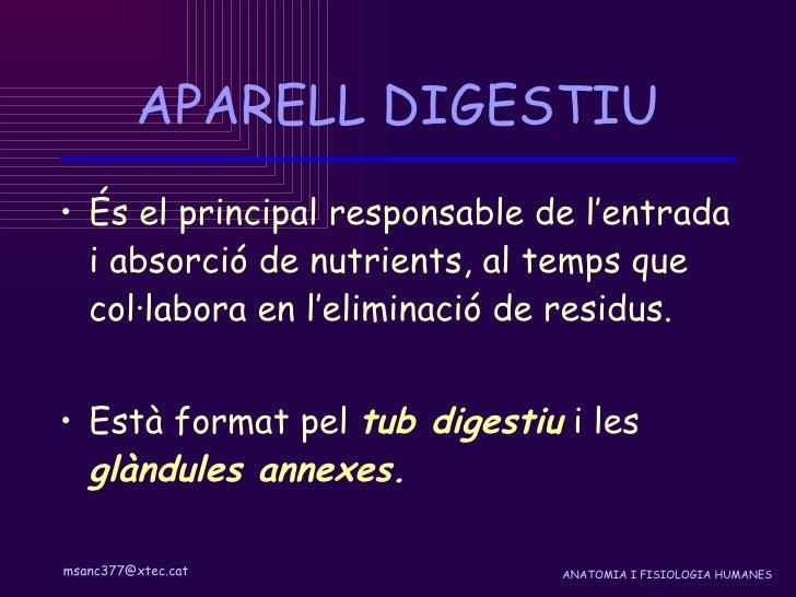 Aparell digestiu Slide 2