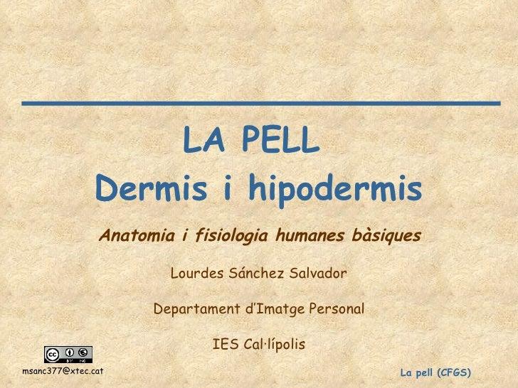 LA PELL  Dermis i hipodermis  Anatomia i fisiologia humanes bàsiques Lourdes Sánchez Salvador Departament d'Imatge Person...