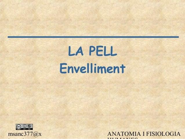 msanc377@x ANATOMIA I FISIOLOGIA LA PELL Envelliment
