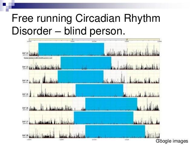 free run circadian rhythms
