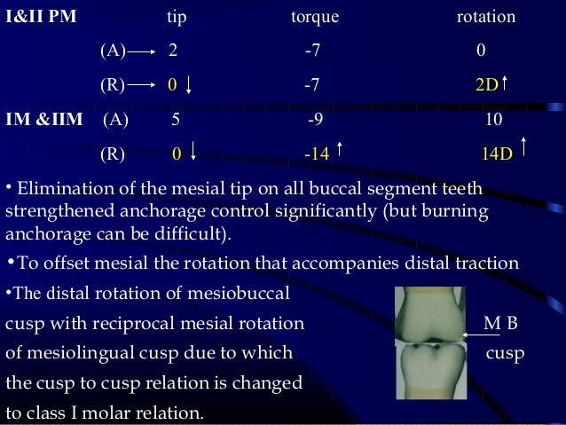 I&II PM tip torque rotation (A) 2 -7 0 (R) 0 -7 2D IM &IIM (A) 5 -9 10 (R) 0 -14 14D • Elimination of the mesial tip on al...