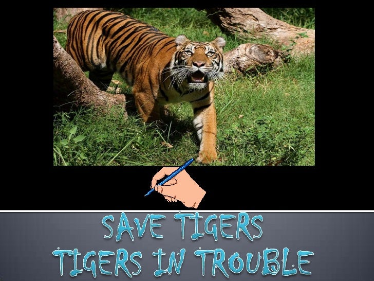 SAVE TIGERS<br />TIGERS IN TROUBLE<br />
