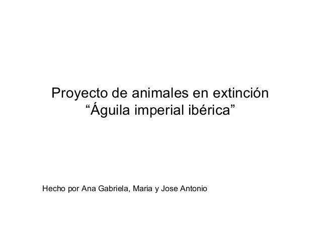 """Proyecto de animales en extinción       """"Águila imperial ibérica""""Hecho por Ana Gabriela, Maria y Jose Antonio"""