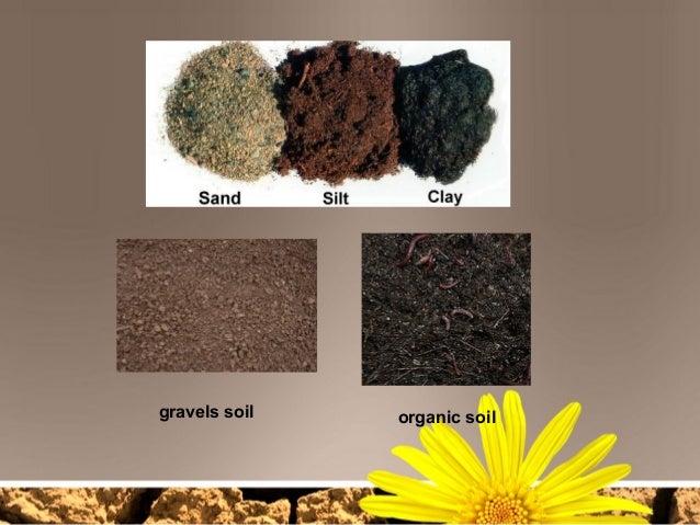 Soil for Mineral soil vs organic soil