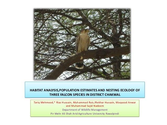 HABITAT ANALYSIS,POPULATION ESTIMATES AND NESTING ECOLOGY OFTHREE FALCON SPECIES IN DISTRICT CHAKWALTariq Mehmood,* Riaz H...