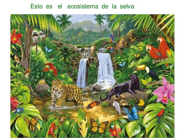 Presen Selva