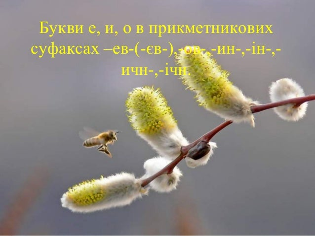 Букви е, и, о в прикметникових суфаксах –ев-(-єв-),-ов-,-ин-,-ін-,- ичн-,-ічн.