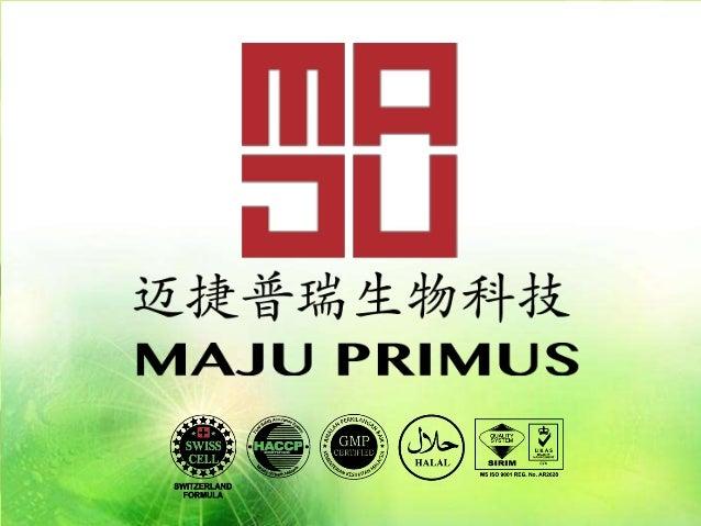 www.majuprimus.com