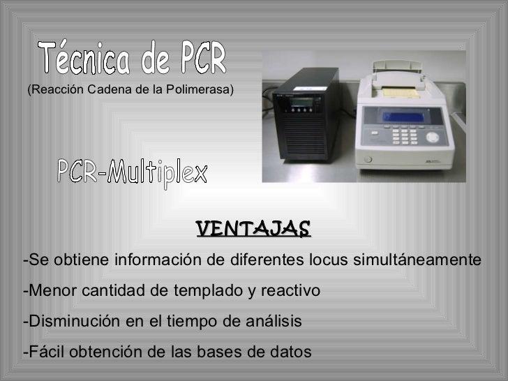 Técnica de PCR (Reacción Cadena de la Polimerasa) PCR-Multiplex VENTAJAS -Se obtiene información de diferentes locus simul...