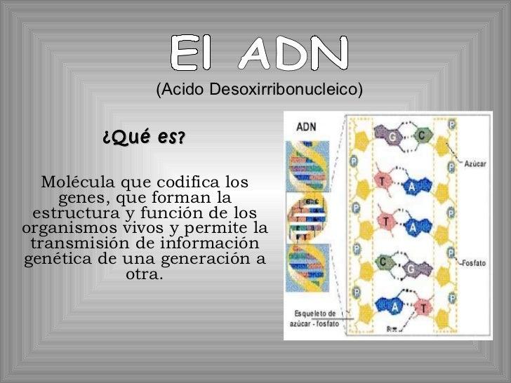 ¿Qué es? Molécula que codifica los genes, que forman la estructura y función de los organismos vivos y permite la transmis...