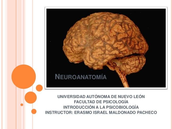 NEUROANATOMÍA       UNIVERSIDAD AUTÓNOMA DE NUEVO LEÓN             FACULTAD DE PSICOLOGÍA        INTRODUCCIÓN A LA PSICOBI...